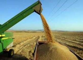 2.45 مليون طن محصول الحبوب الموسم الحالي