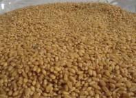 تونس تشتري 184 ألف طن من القمح اللين