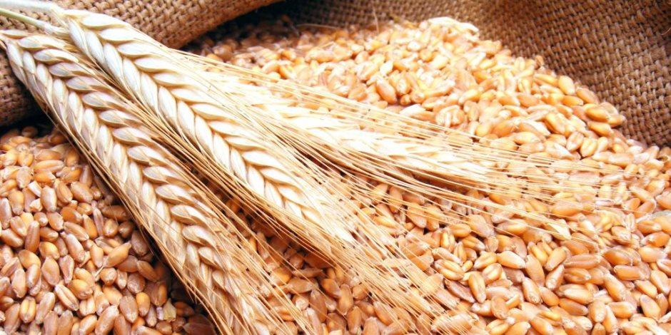 في مناقصة عالمية ..تونس تشتري نحو 67 ألف طن من القمح و50 ألف طن من الشعير