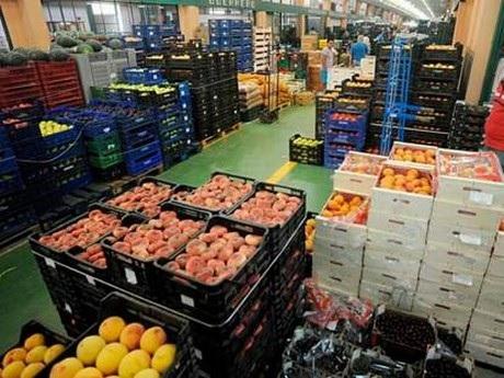 إرتفاع في صادرات الغلال بنسبة 40 %