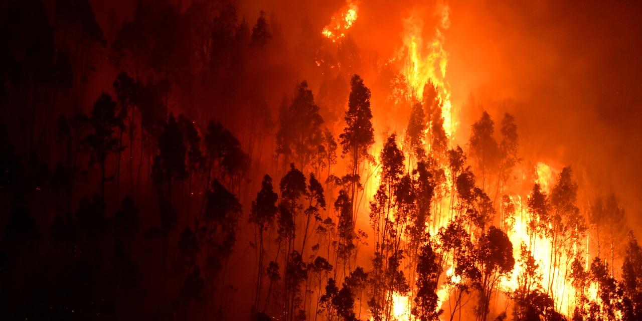 السيطرة على حريق امتد على 11 هكتارا بباجة
