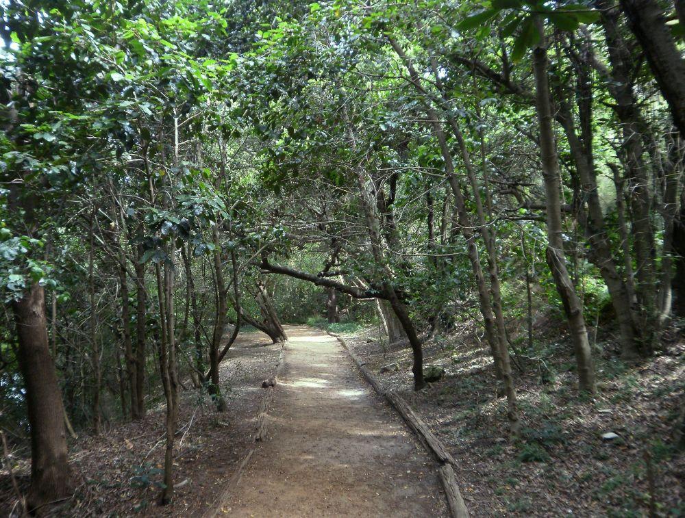 إطلاق مشروع التصرف المندمج في المشاهد الغابية
