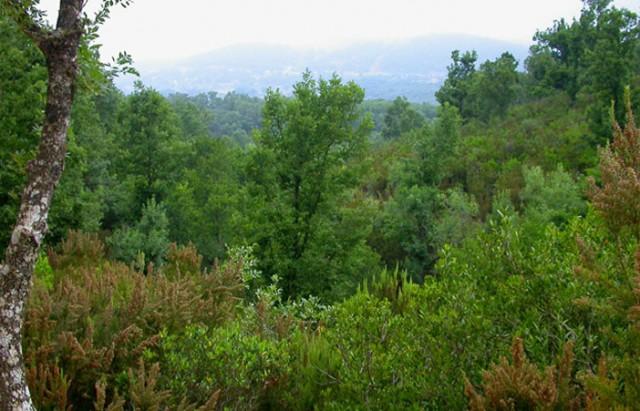 يهمّ سكان المناطق الريفية: إلغاء تراخيص استغلال الموارد الغابية