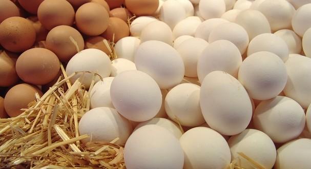 الحكومة تشرع في ضخ كميات تقدر ب 5 ملايين بيضة إضافية