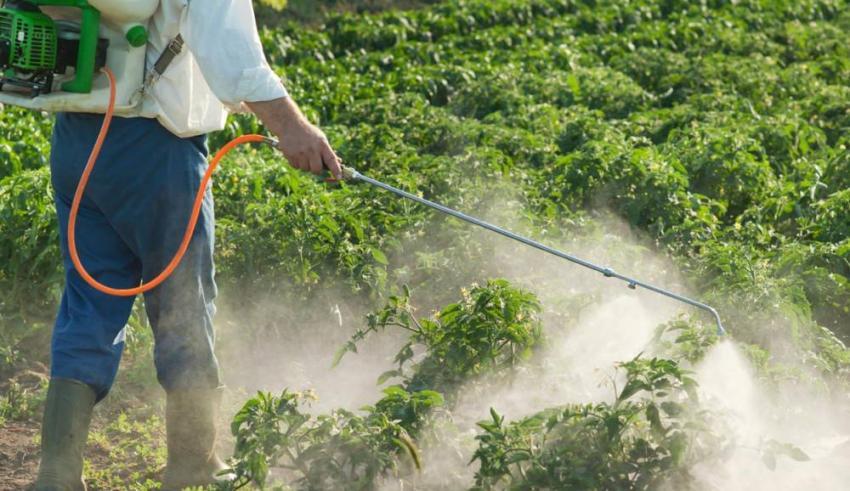 %74 من عاملات الفلاحة يستعملن المبيدات دون اي تكوين