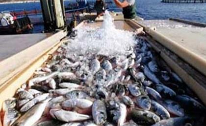 تطور قيمة صادرات منتجات الصيد البحري بـ 30,32 %