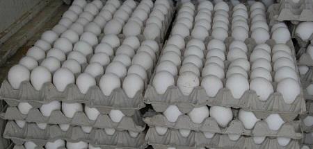 """وزارة التجارة: """"لا زيادة في سعر البيض"""""""