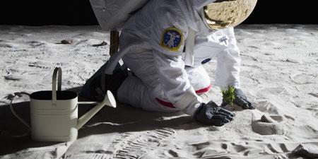 الصين تزرع القطن على سطح القمر