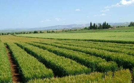 10آلاف هكتار من الأراضي الدولية لفائدة حاملي الشهائد العليا