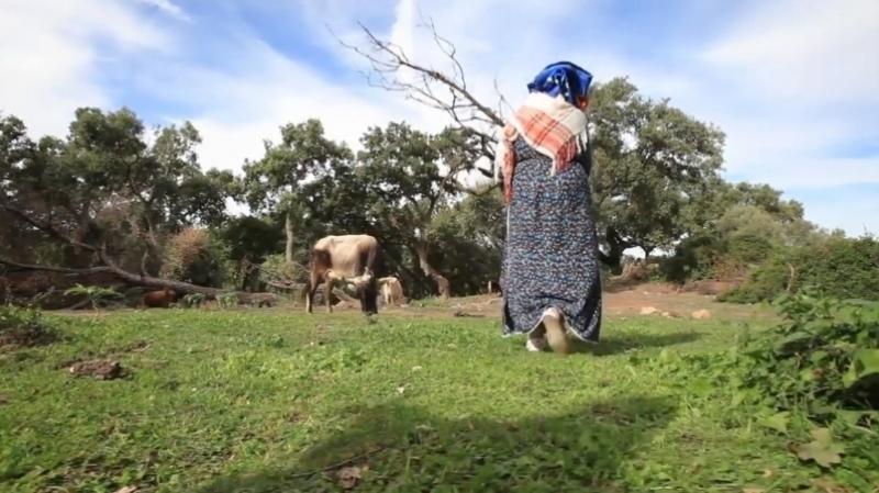 انطلاق تسجيل المرأة الريفية في منظومة التغطية الاجتماعية
