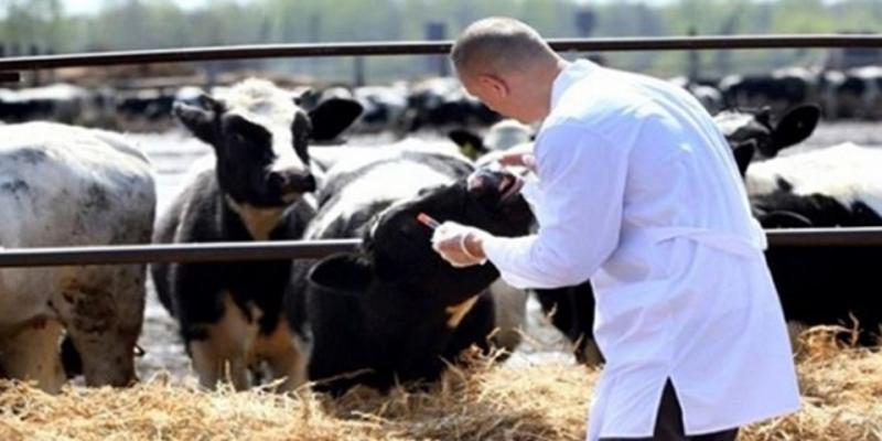 عميد البياطرة: الرقابة على المنتوجات الحيوانية منعدمة في جل الاسواق