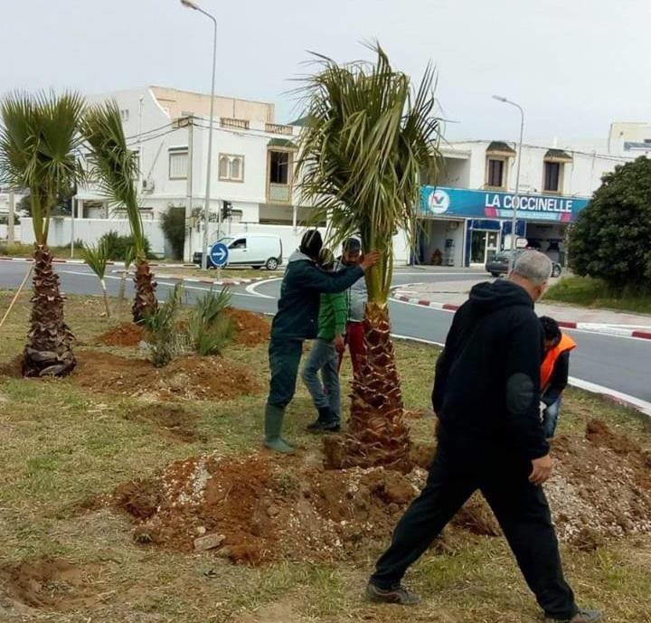 """وزارة البيئة تنفي """"اقتلاع """" الأشجار و النباتات التي تم غراستها بمناسبة القمة (صور)"""