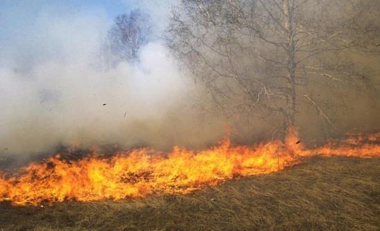 حريق يأتي على 9 آلاف متر مربع من المحاصيل الزراعية بسليانة