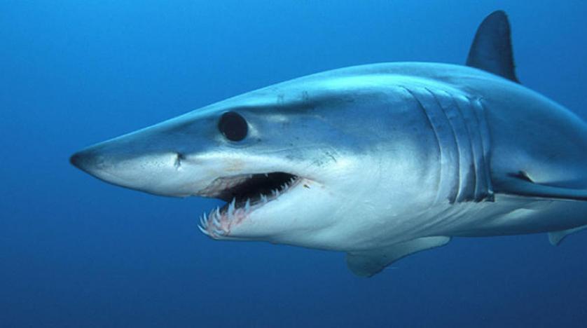 تونس ثاني أكبر صائد لسمك القرش في المتوسط