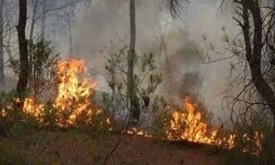 """القصرين :""""السيطرة على جزء من حريق جبل الشعانبي """""""