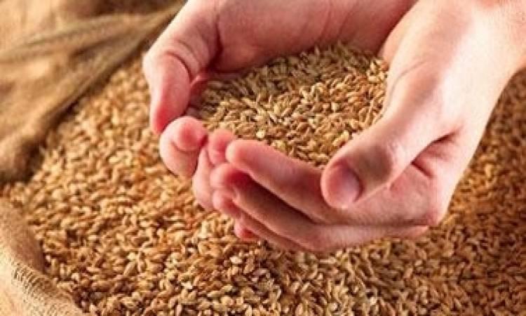 اتحاد الفلاحة يدعو لإيجاد حلول عاجلة لرفع كميات الحبوب