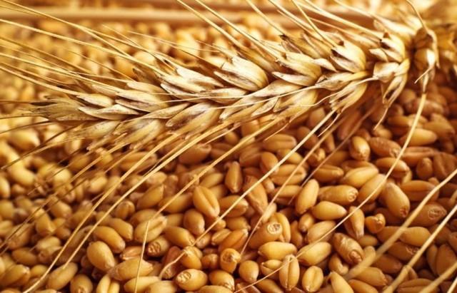 ديوان الحبوب:'الكمية المجمعة من القمح اللين لا تكفي لشهر إستهلاك