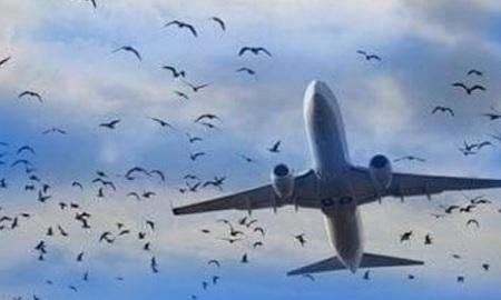 طيور النورس تجبر طائرة ركاب روسية على الهبوط اضطراريا
