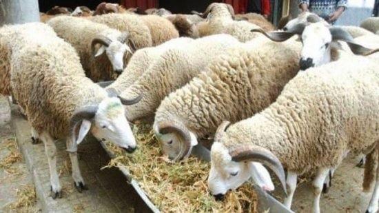 اتحاد الفلاحة  يحذر من امكانية انقطاع تربية الماشية