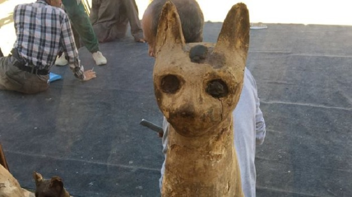 مصر تعرض للعموم مومياوات لحيوانات (صور)