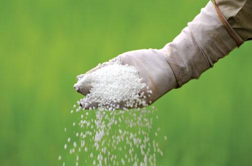"""منظمة المزارعين :""""اسعار الاسمدة ستشهد ارتفاعا بسبب ازمة """"المجمع الكيميائي """""""