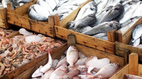 ارتفاع عائدات صادرات الصيد البحري