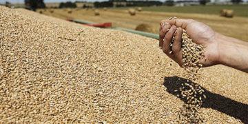 """وزارة التجارة :""""مخزون الحبوب يمكن من تغطية الطلب المحلي الى غاية شهر اوت """""""