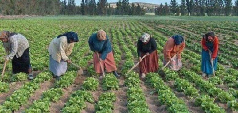 56 بالمائة من العاملين بالقطاع الفلاحي من فئة النساء