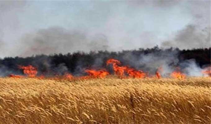 تصل الى 20 سنة  ..عقوبات سجنية  لكل من يتسبب في اندلاع الحرائق بالغابات و المزارع