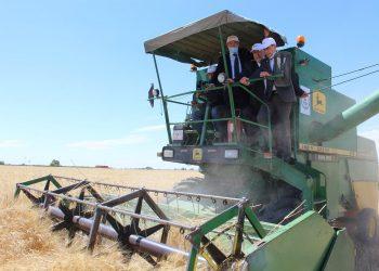 """وزير الفلاحة:"""" صابة متوسطة من الحبوب هذا العام"""""""