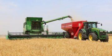 الكاف: تجميع اكثر من 93 الف قنطار من الحبوب