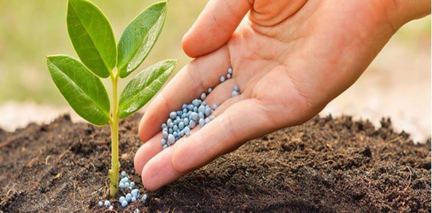 إجراءات جديدة لتجاوز النقص في الأسمدة الكيميائية