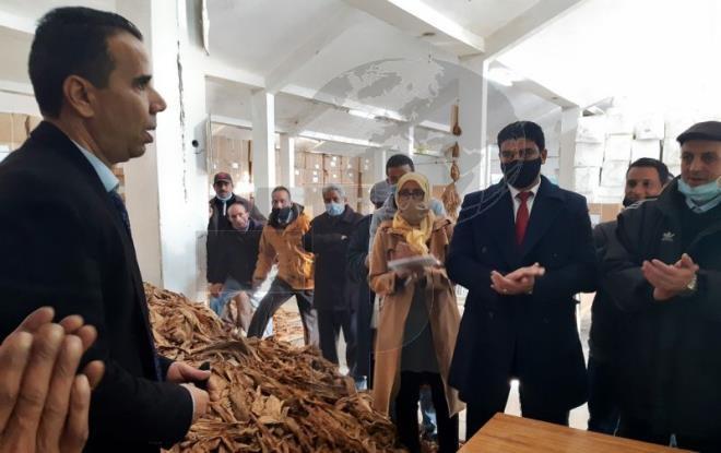 للحد من التوريد: نحو الترفيع في عدد مزارعي التبغ