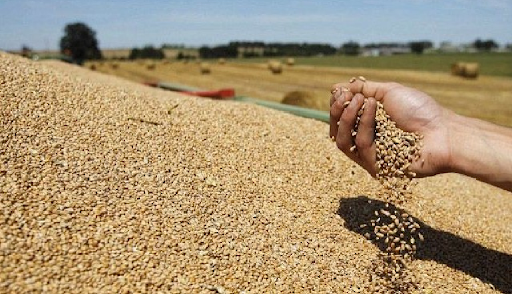 وزير الفلاحة: صابة الحبوب ستكون أفضل من الموسم الفارط