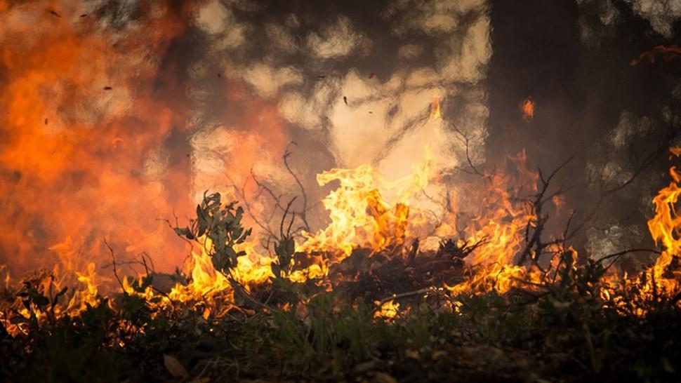 حرائق غابية ضخمة تتسبب في احتراق عدّة منازل بالكاف