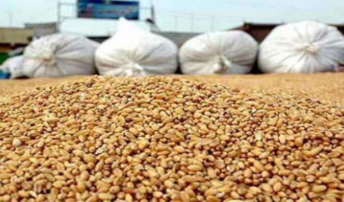 لأول مرة.. عدم إتلاف كميات من محصول الحبوب خلال التجميع