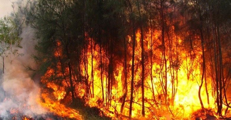 حرائق غابات بالجزائر تتسبب في وفاة 7 أشخاص