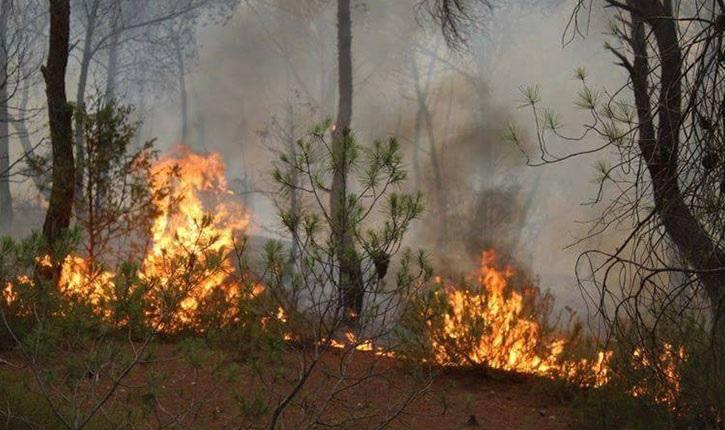 تضرّر 5700 هكتار من المساحات الغابيّة بمعتمديتي فرنانة وعين دراهم