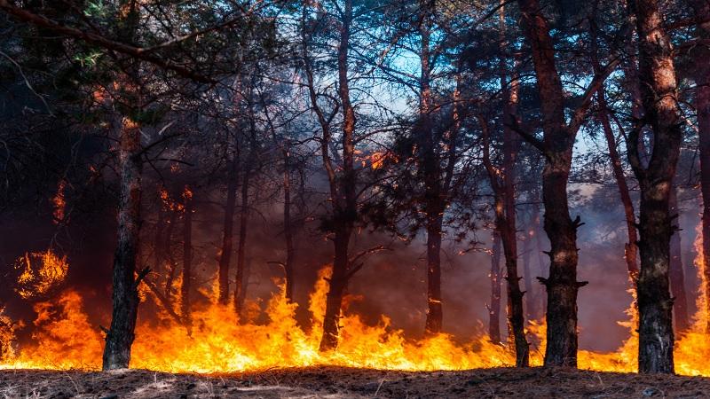 المساحات المحترقة بالغابات التونسية زادت بنسبة 322 بالمائة