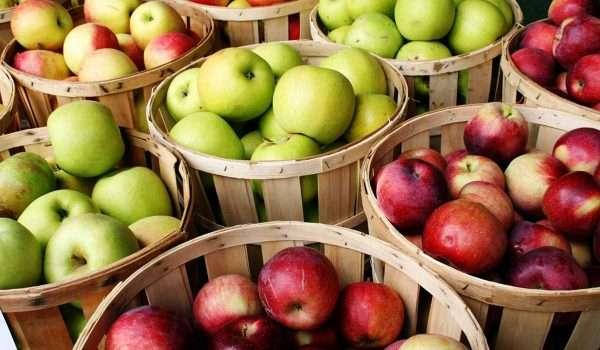 سليانة: تقديرات بإنتاج 17 ألف طن من التفاح